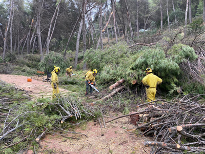 Comienzan los trabajos para recuperar El Bosque de Morata de Tajuña tras el paso de Filomena