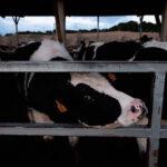 La ganadería industrial está devorando el planeta