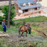 Villar recupera su pinar tras el paso de Filomena utilizando la fuerza de un caballo