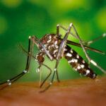 Temporada del mosquito tigre