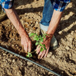 Rivas apuesta por la gestión integral del Parque Agroecológico del Soto del Grillo