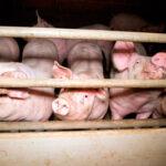 Consumo excesivo de carne: ¿cuáles son los grandes problemas?