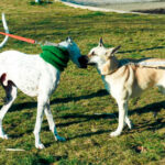 Rivas creará un Paseo de los Animales con fotos que envíe la ciudadanía
