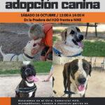 Jornada de Adopción Canina de Rivanimal-CIPAR